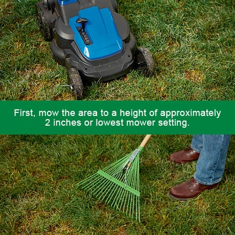 First, mow the area to a height of approximately 2 inches or lowest mower setting.