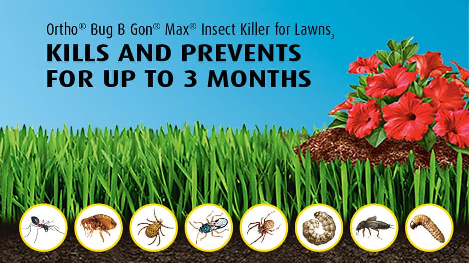 Photo of insects and pests that Ortho Bug-B-Gon Max kills