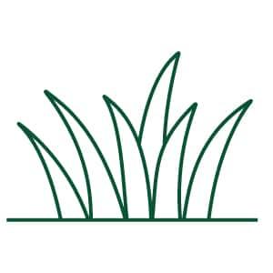 Grass Types Graphic