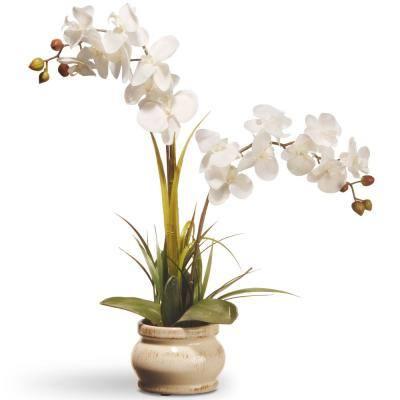 Cream Colored Orchid in Ceramic Pot