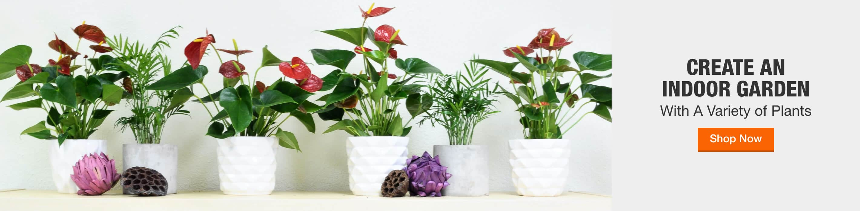 CREATE AN INDOOR GARDEN With A Variety of Plants Shop Now