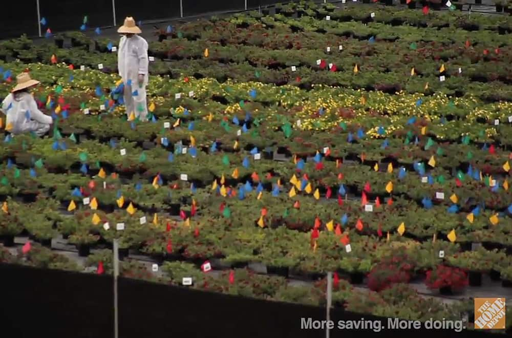 Video: Drought Resistant Plants