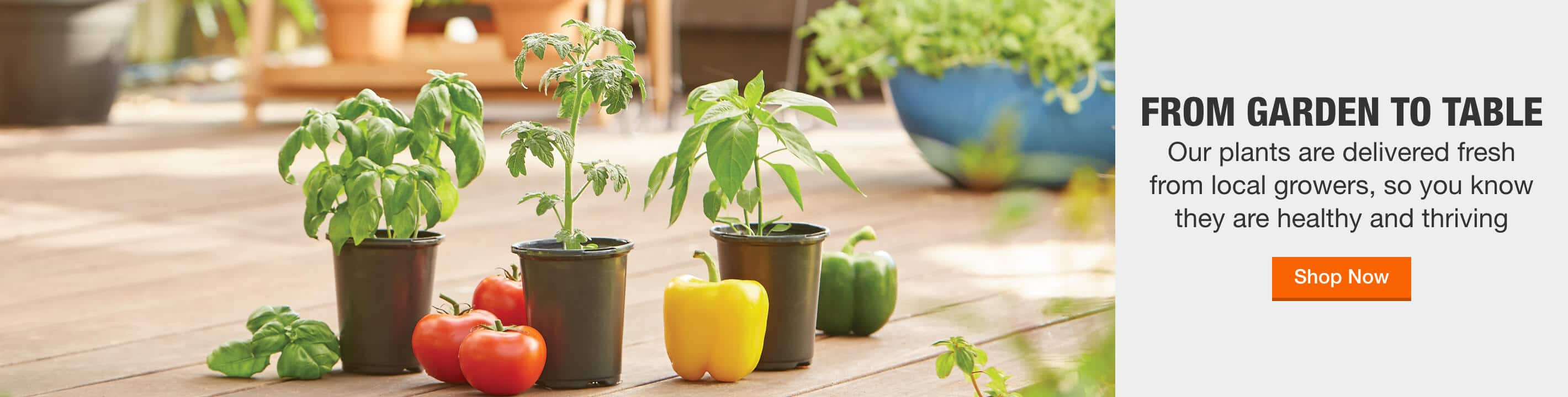 FROM GARDEN TO TABLE Our plants are delivered fresh from local growers, so you know they are healthy and thriving. Shop Now