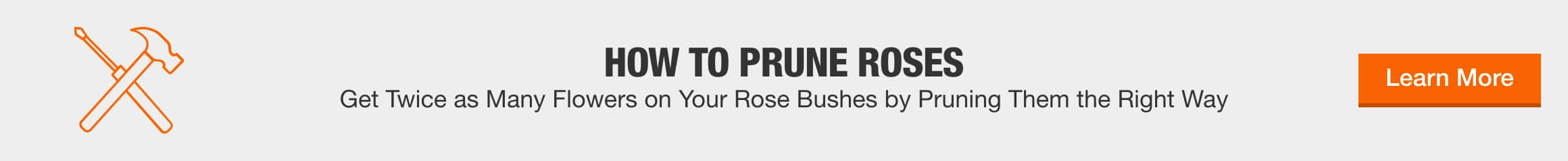 HOW TO PRUNE ROSES Get Twice as Many Flowers on Your Rose Bushes by Pruning Them the Right Way