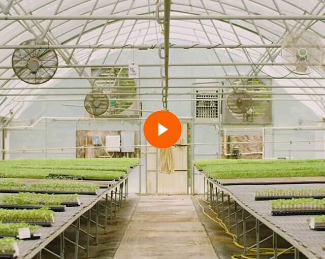 Virtual Field Trip to Bonnie Plants: Episode 2