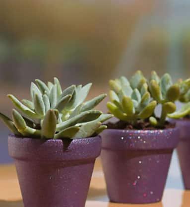 Purple planter pots