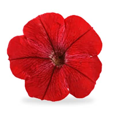 Red annuals
