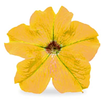 Yellow annuals