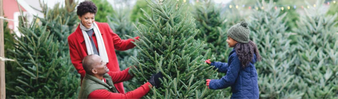 Fresh-Cut Christmas Trees Coming Soon