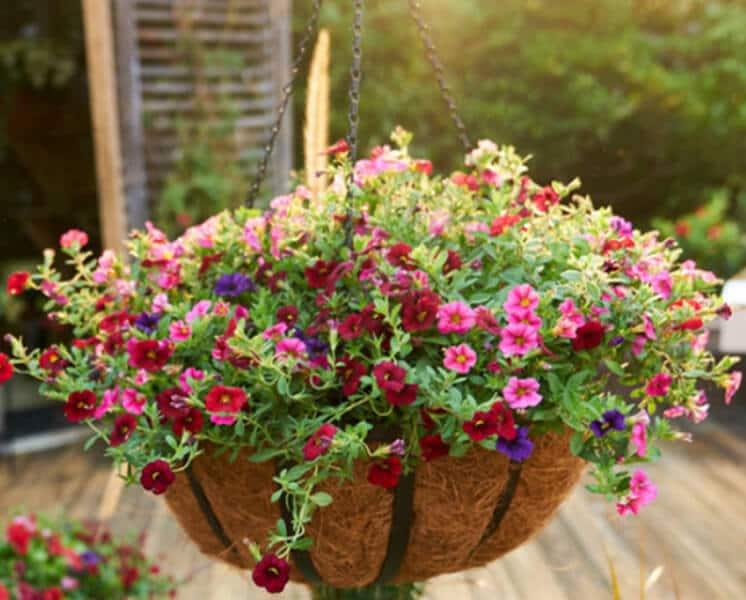 Make a Hanging Planter